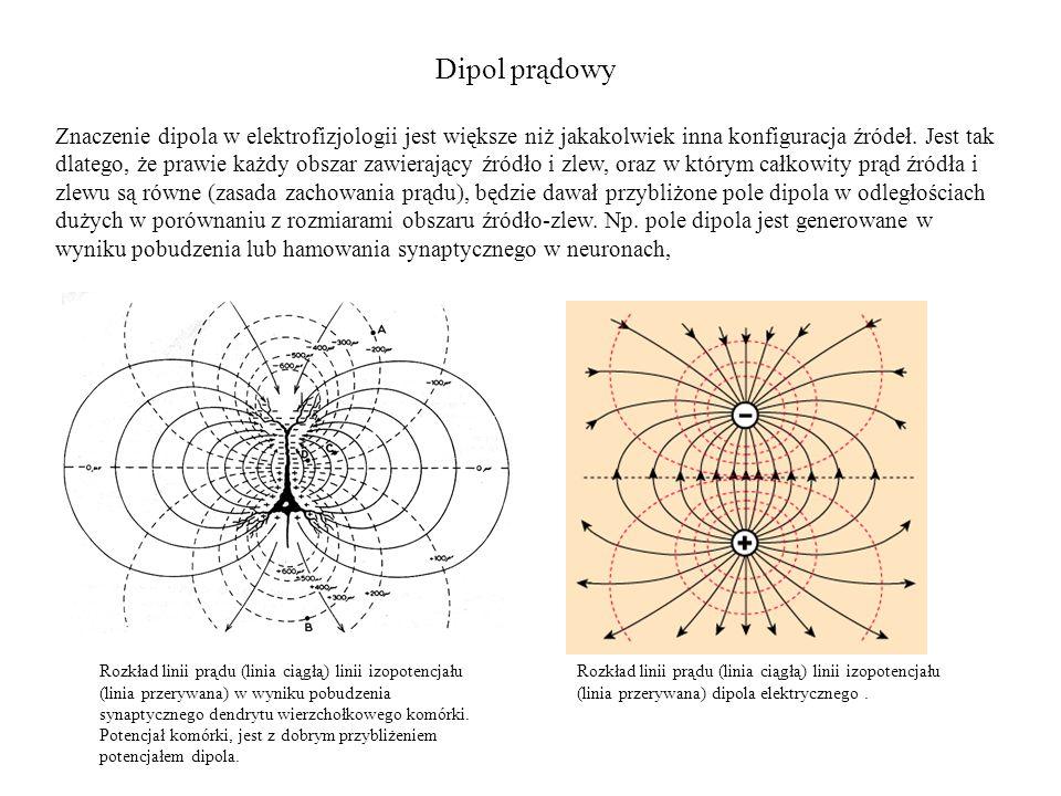 Dipol prądowy Znaczenie dipola w elektrofizjologii jest większe niż jakakolwiek inna konfiguracja źródeł. Jest tak dlatego, że prawie każdy obszar zaw