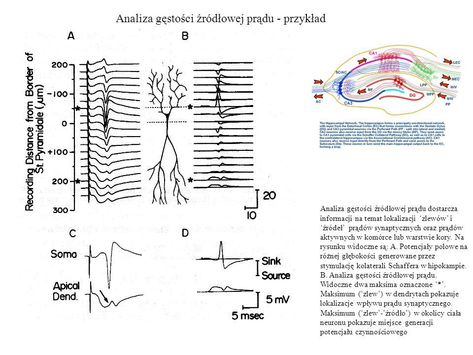 Analiza gęstości źródłowej prądu - przykład Analiza gęstości źródłowej prądu dostarcza informacji na temat lokalizacji 'zlewów' i 'źródeł' prądów synaptycznych oraz prądów aktywnych w komórce lub warstwie kory.