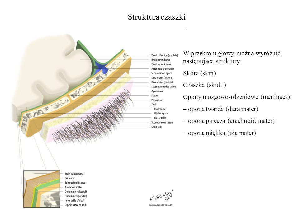 Struktura czaszki W przekroju głowy można wyróżnić następujące struktury: Skóra (skin) Czaszka (skull ) Opony mózgowo-rdzeniowe (meninges): – opona tw