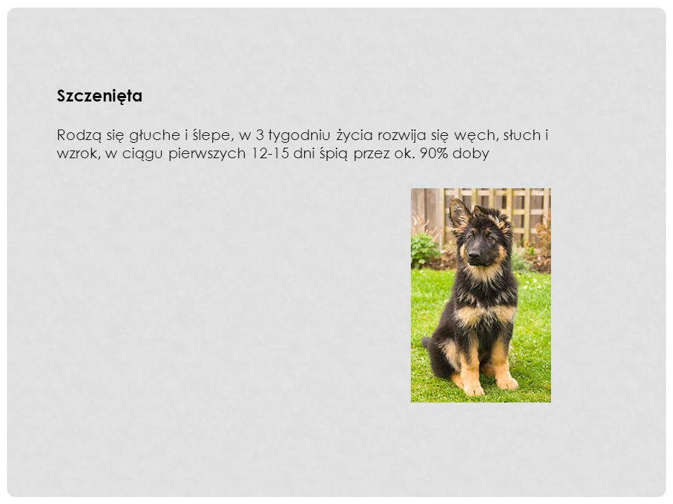 Wielkość i waga Psy - wysokość w kłębie 60 cm do 65 cm, waga 30 kg do 40 kg.