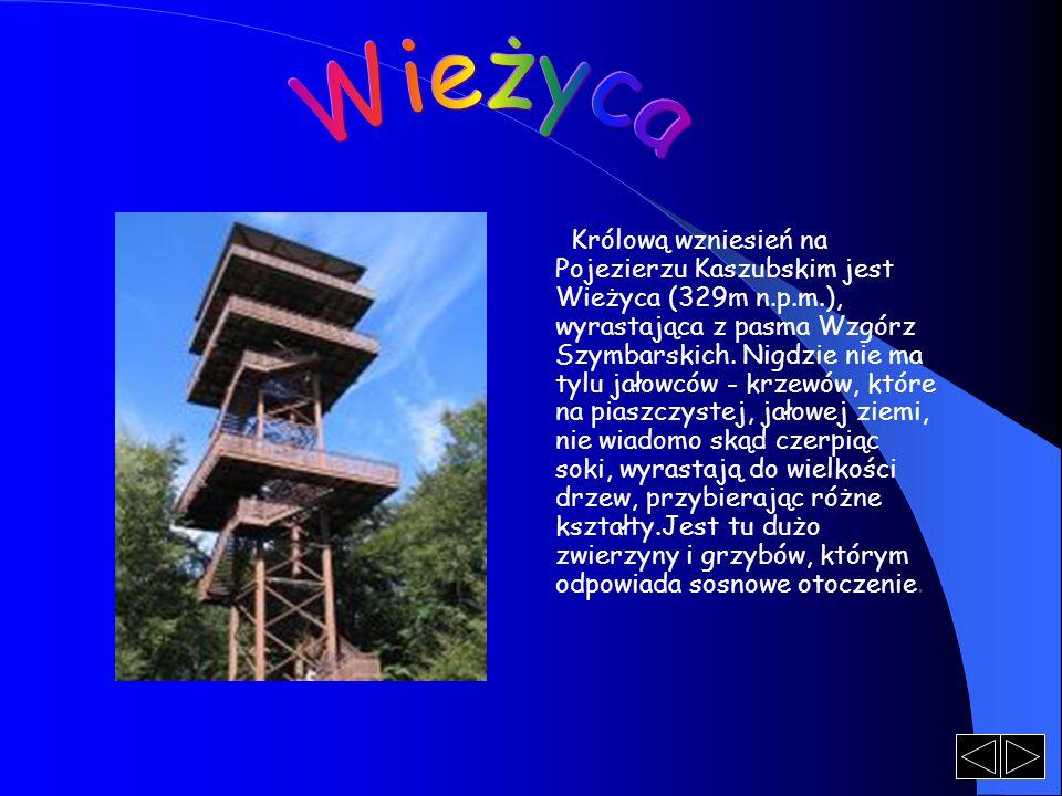 Królową wzniesień na Pojezierzu Kaszubskim jest Wieżyca (329m n.p.m.), wyrastająca z pasma Wzgórz Szymbarskich. Nigdzie nie ma tylu jałowców - krzewów
