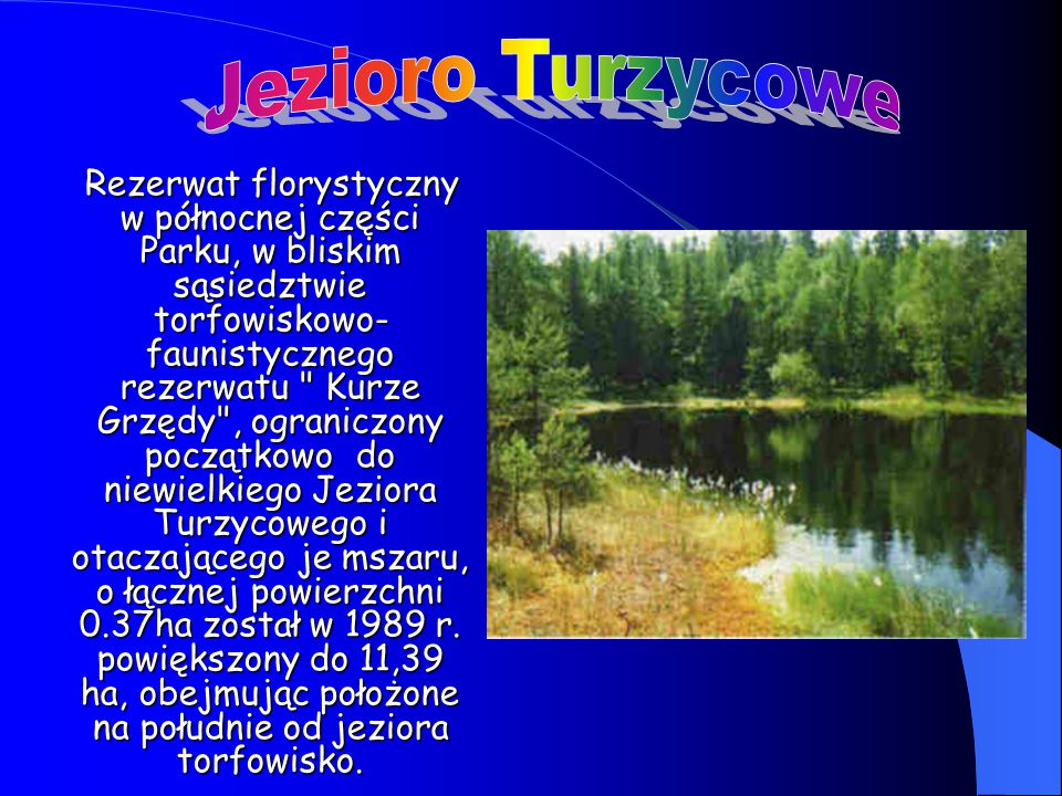 Rezerwat florystyczny w północnej części Parku, w bliskim sąsiedztwie torfowiskowo- faunistycznego rezerwatu Kurze Grzędy , ograniczony początkowo do niewielkiego Jeziora Turzycowego i otaczającego je mszaru, o łącznej powierzchni 0.37ha został w 1989 r.