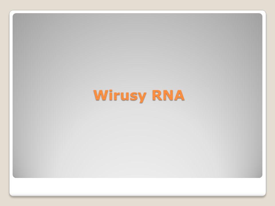 Wirusy RNA