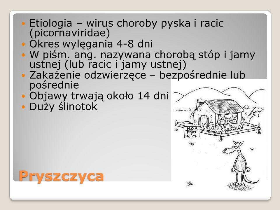 Pryszczyca Etiologia – wirus choroby pyska i racic (picornaviridae) Okres wylęgania 4-8 dni W piśm. ang. nazywana chorobą stóp i jamy ustnej (lub raci