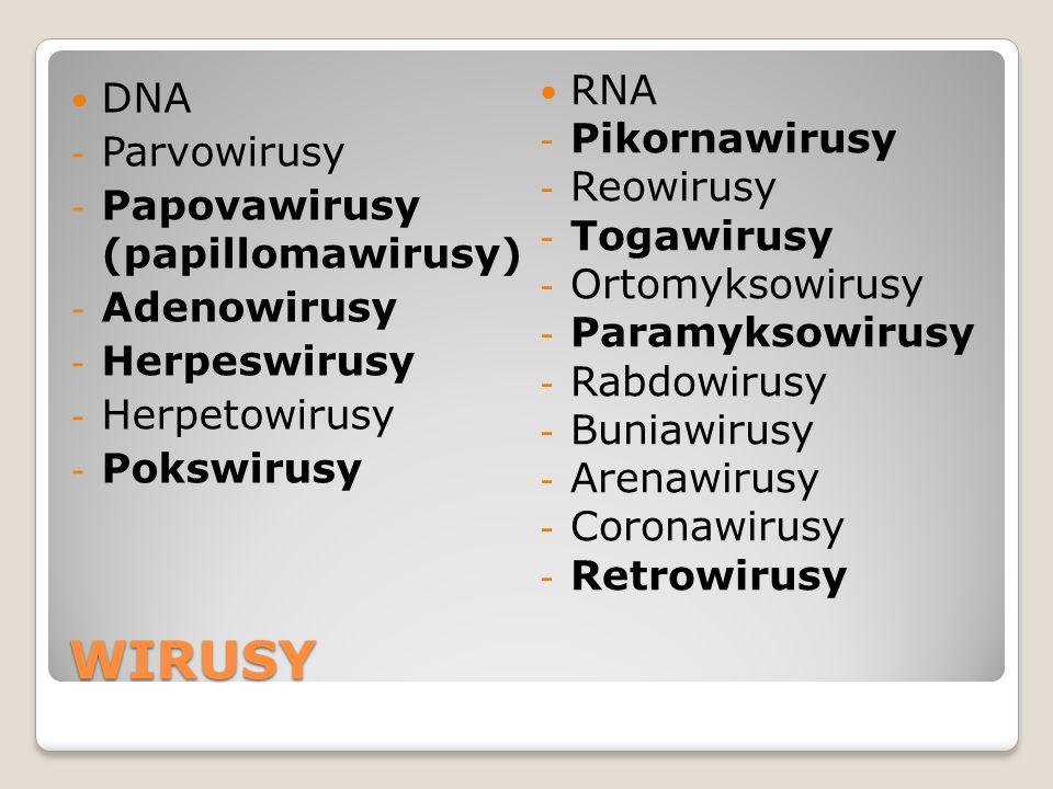 WIRUSY DNA - Parvowirusy - Papovawirusy (papillomawirusy) - Adenowirusy - Herpeswirusy - Herpetowirusy - Pokswirusy RNA - Pikornawirusy - Reowirusy -