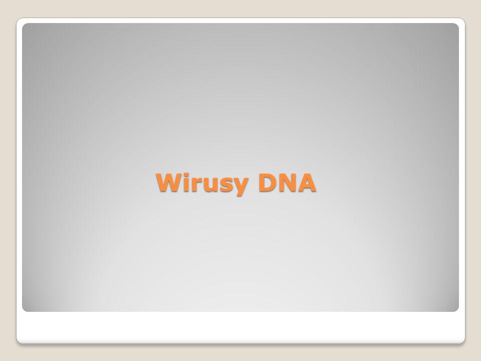 Wirusy DNA