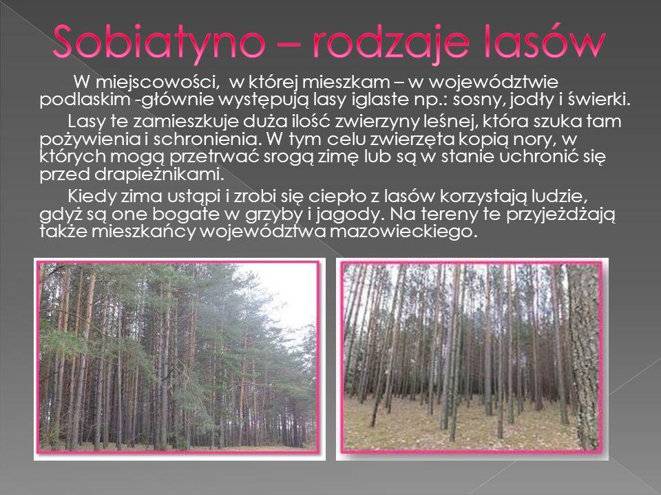 Las jest domem zwierząt, źródłem ich pożywienia, a także schronienia.