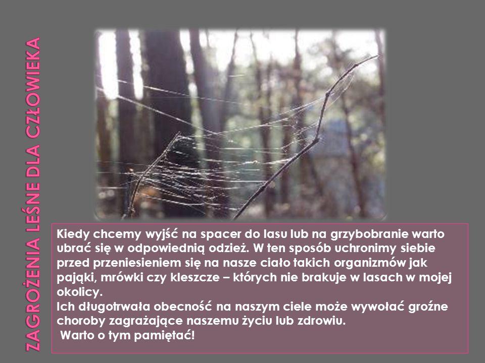 Przygotowała: Aneta Łobodzińska ZS Milejczyce