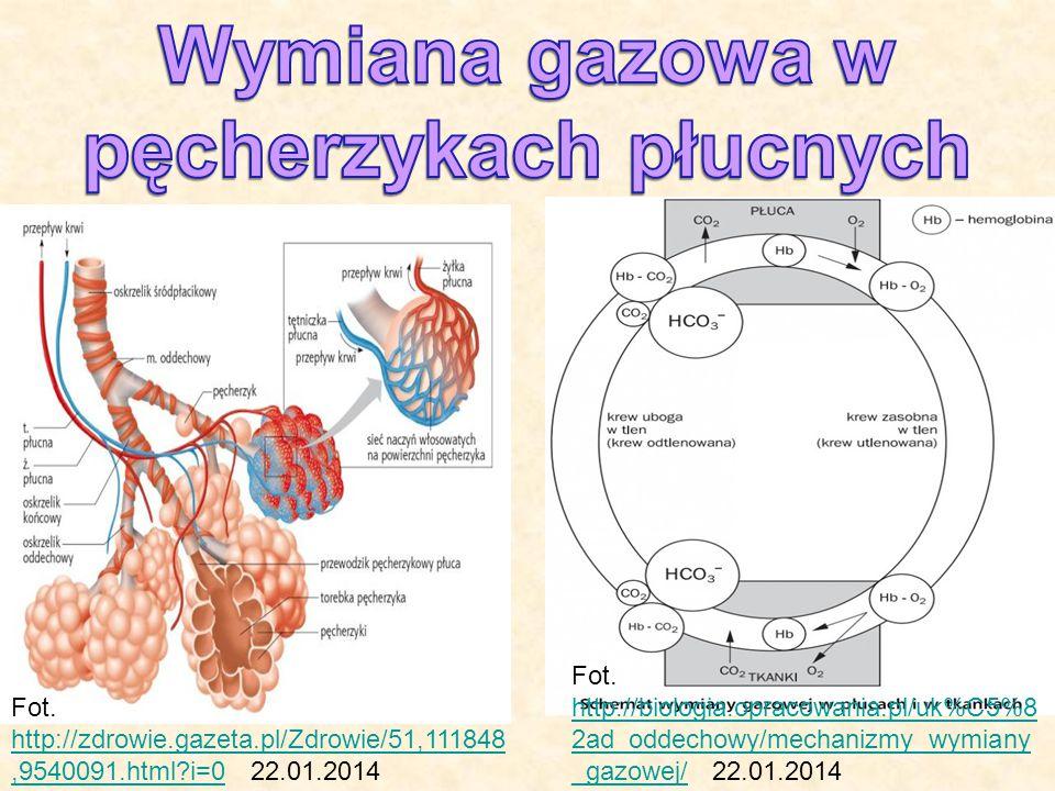 Fot. http://zdrowie.gazeta.pl/Zdrowie/51,111848,9540091.html?i=0 22.01.2014 http://zdrowie.gazeta.pl/Zdrowie/51,111848,9540091.html?i=0 Fot. http://bi