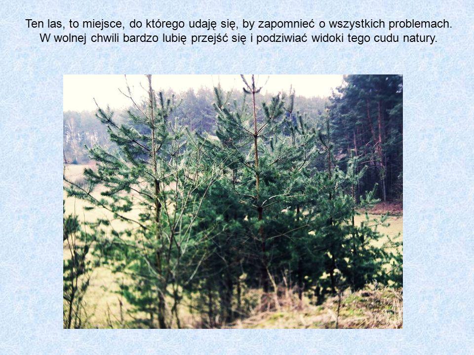 Ten las, to miejsce, do którego udaję się, by zapomnieć o wszystkich problemach.