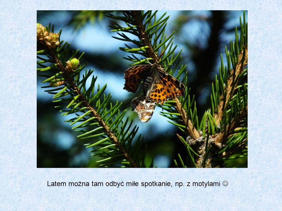 Latem można tam odbyć miłe spotkanie, np. z motylami