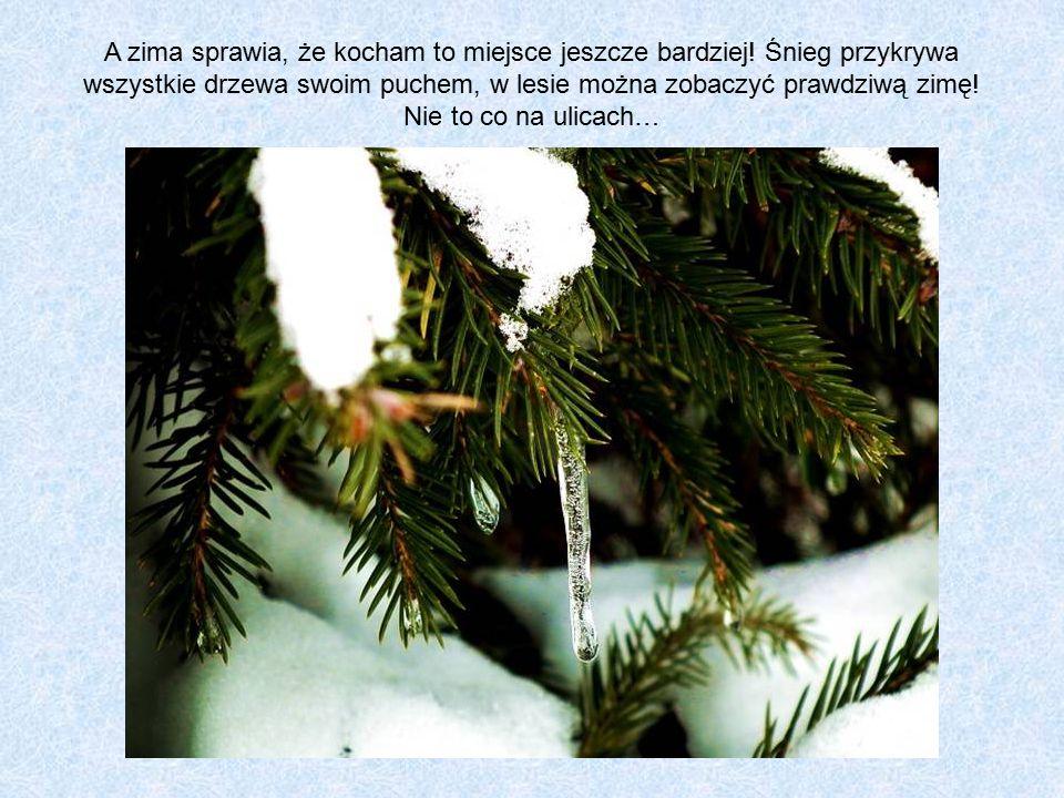 """""""To wśród setek drzew człowiek powinien się gubić a nie wśród ludzi."""
