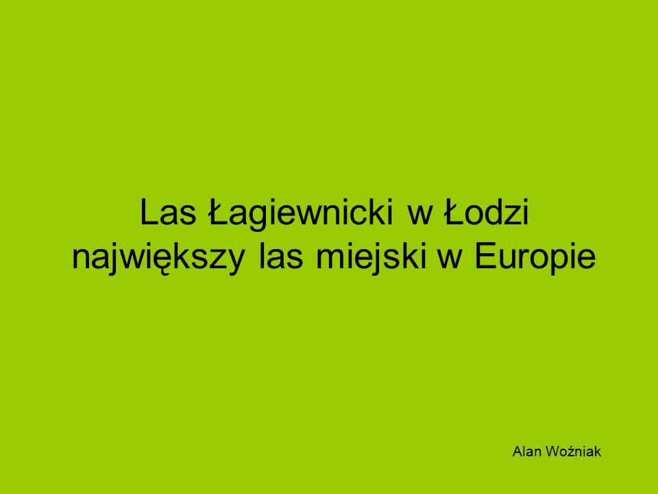 Las Łagiewnicki znajduje się w północno- wschodniej części Łodzi, ok.