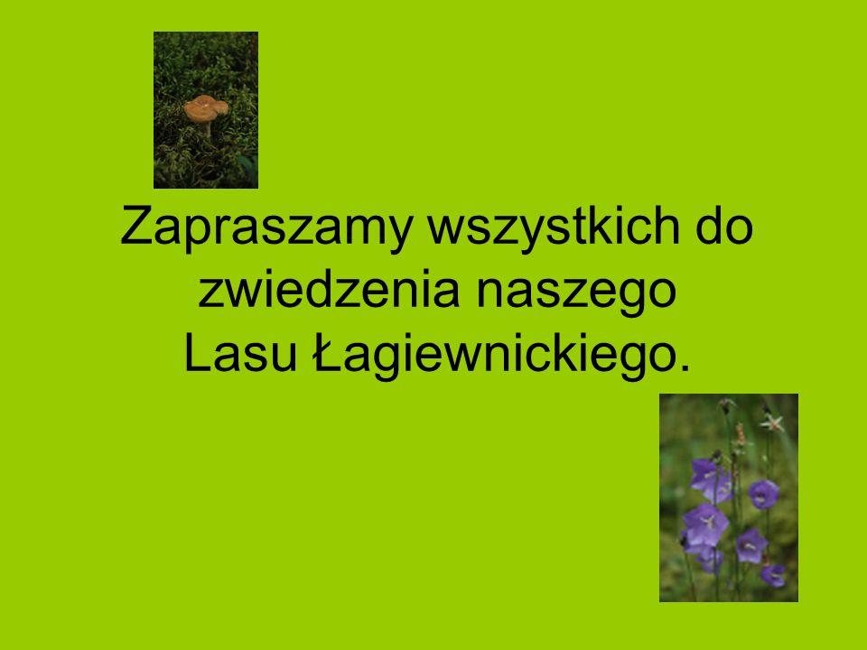 Zapraszamy wszystkich do zwiedzenia naszego Lasu Łagiewnickiego.