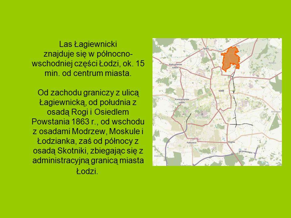 Las Łagiewnicki jest największym miejskim kompleksem leśnym w Europie i drugim na świecie.