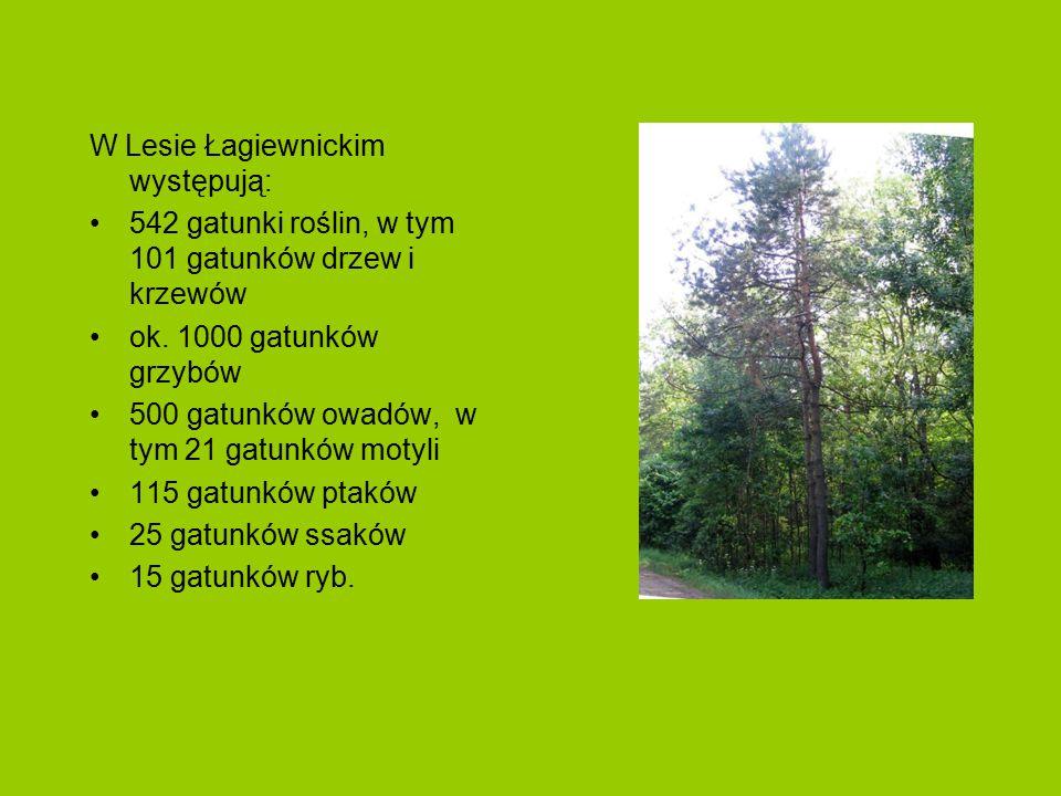 Od roku 1965 na terenie Lasu wytyczono szlaki pieszsze i rowerowe, ścieżki przyrodniczo-leśne oraz umieszczono tablice informujące o historii danego miejsca.