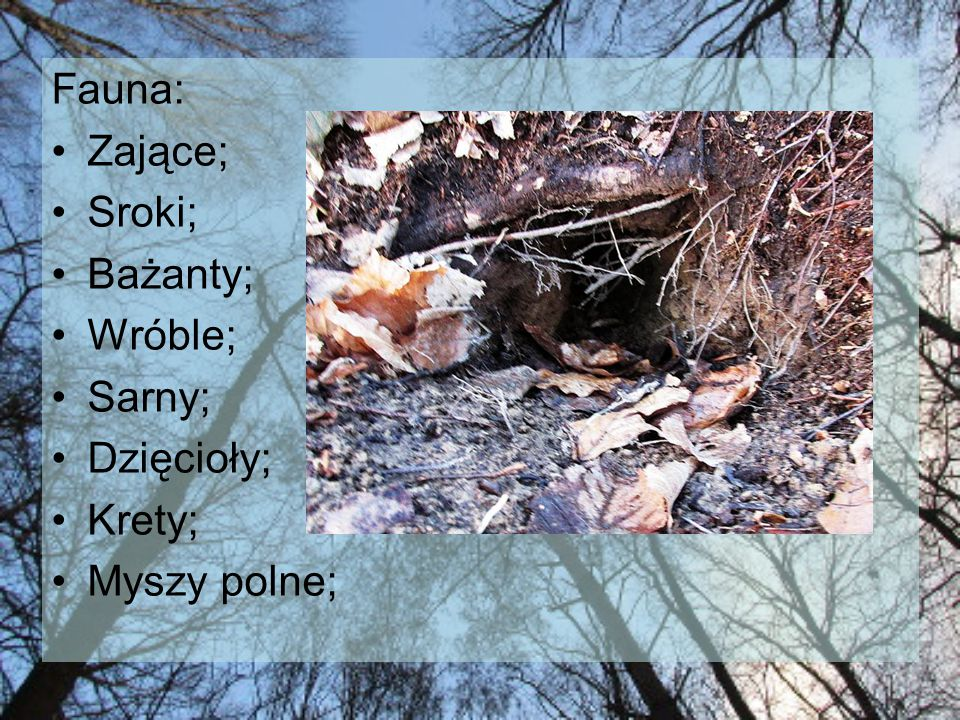 Fauna: Zające; Sroki; Bażanty; Wróble; Sarny; Dzięcioły; Krety; Myszy polne;