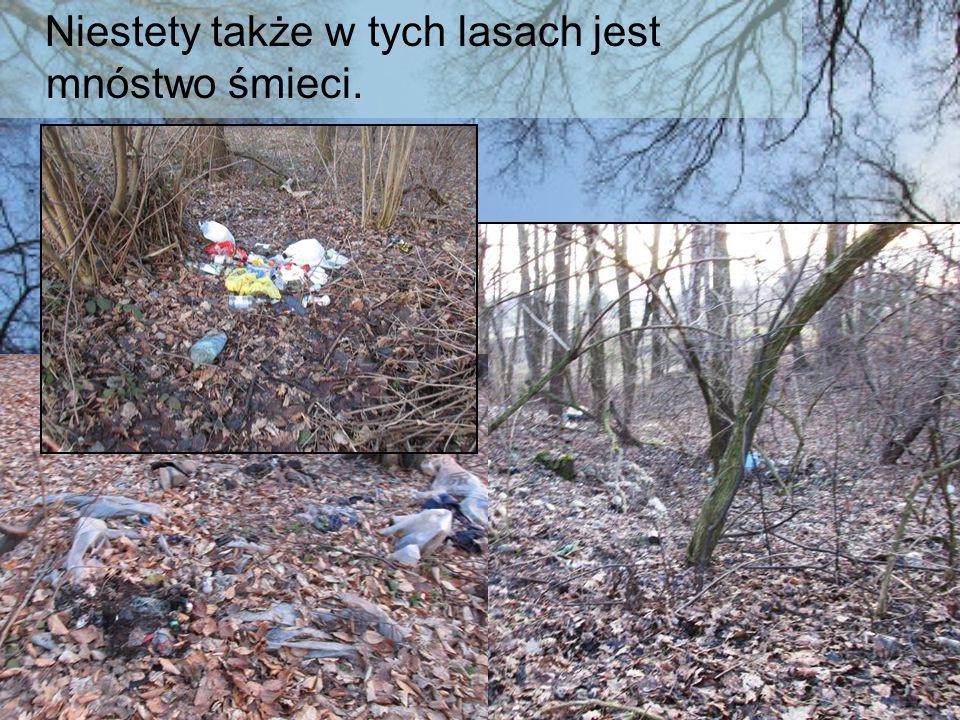 Niestety także w tych lasach jest mnóstwo śmieci.