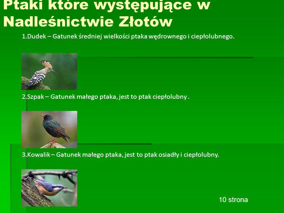 Ptaki które występujące w Nadleśnictwie Złotów 1.Dudek – Gatunek średniej wielkości ptaka wędrownego i ciepłolubnego.