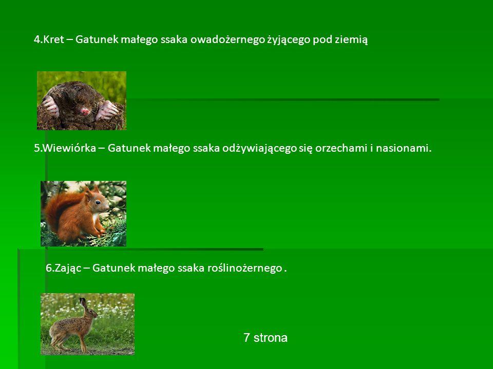 4.Kret – Gatunek małego ssaka owadożernego żyjącego pod ziemią 5.Wiewiórka – Gatunek małego ssaka odżywiającego się orzechami i nasionami.
