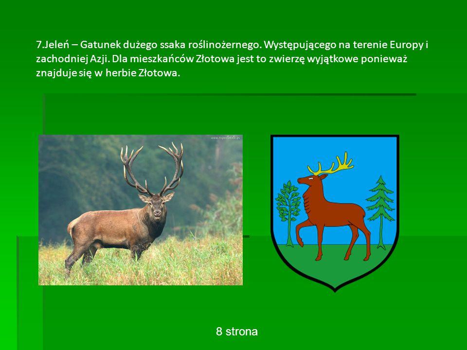 7.Jeleń – Gatunek dużego ssaka roślinożernego. Występującego na terenie Europy i zachodniej Azji.