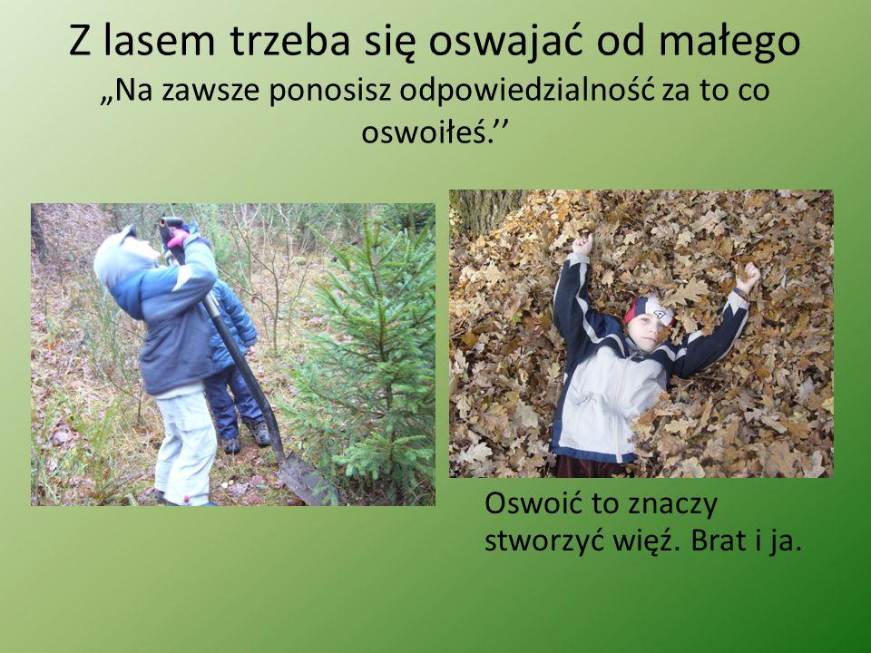 """Z lasem trzeba się oswajać od małego """"Na zawsze ponosisz odpowiedzialność za to co oswoiłeś.'' Oswoić to znaczy stworzyć więź."""
