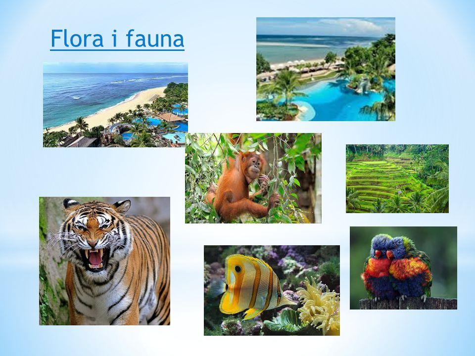 Flora i fauna