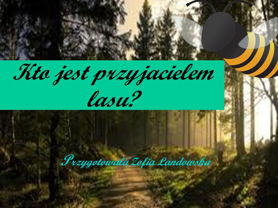 Kto jest przyjacielem lasu? P rzygotowała Zofia Landowska