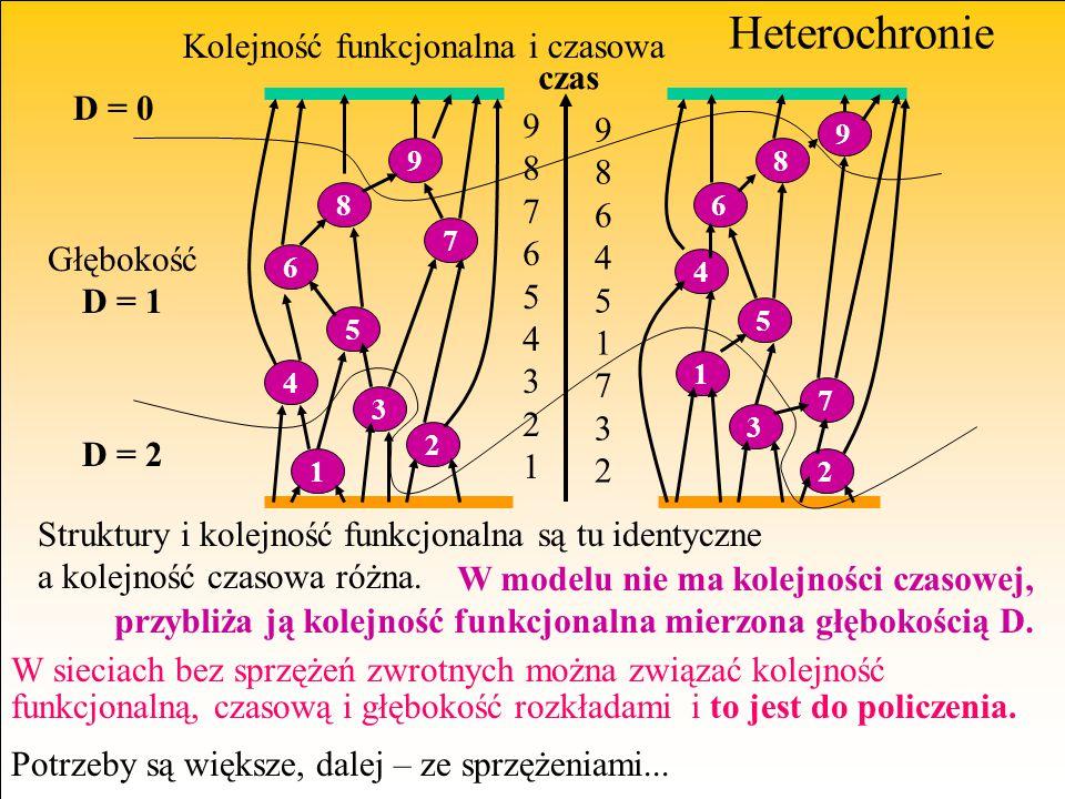 Heterochronie Kolejność funkcjonalna i czasowa 1 4 3 2 5 6 8 7 9 1 3 2 7 5 4 6 8 9 987654321987654321 986451732986451732 Struktury i kolejność funkcjo
