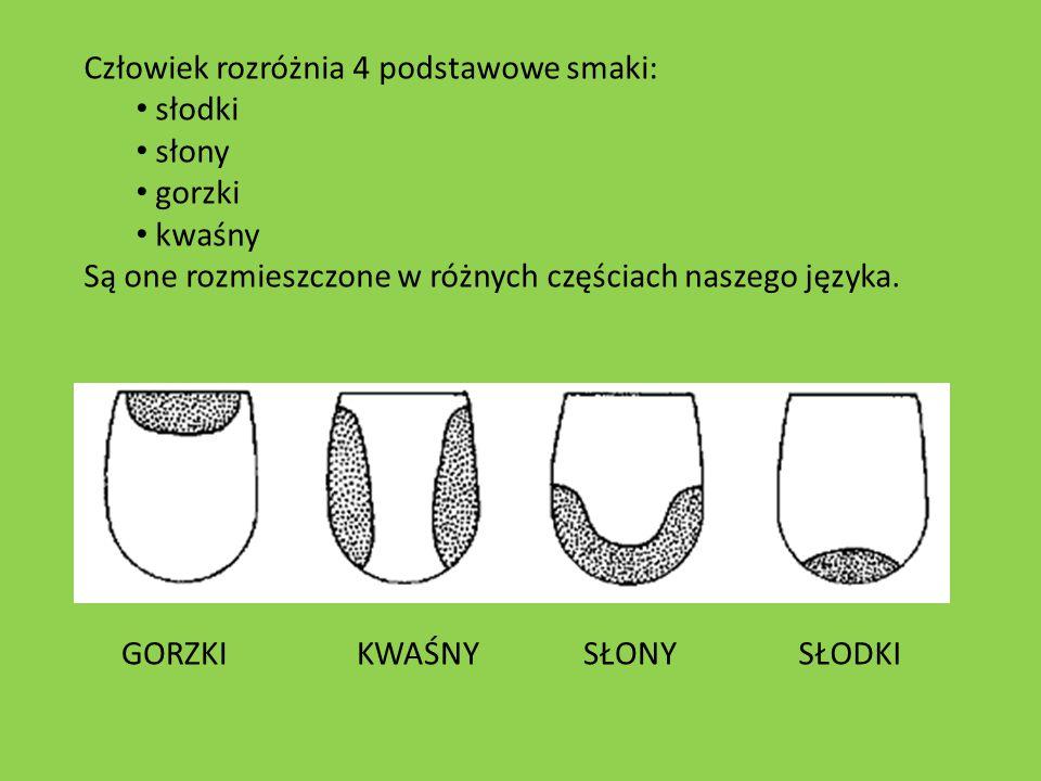 Człowiek rozróżnia 4 podstawowe smaki: słodki słony gorzki kwaśny Są one rozmieszczone w różnych częściach naszego języka. SŁONYGORZKIKWAŚNYSŁODKI