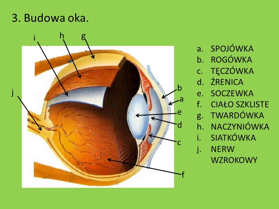 3. Budowa oka. i h j b a e d c f g a.SPOJÓWKA b.ROGÓWKA c.TĘCZÓWKA d.ŹRENICA e.SOCZEWKA f.CIAŁO SZKLISTE g.TWARDÓWKA h.NACZYNIÓWKA i.SIATKÓWKA j.NERW