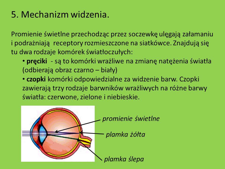 5. Mechanizm widzenia. Promienie świetlne przechodząc przez soczewkę ulęgają załamaniu i podrażniają receptory rozmieszczone na siatkówce. Znajdują si