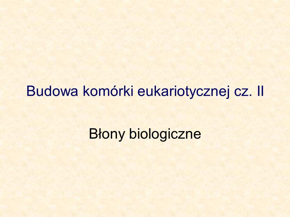 Budowa komórki eukariotycznej cz. II Błony biologiczne