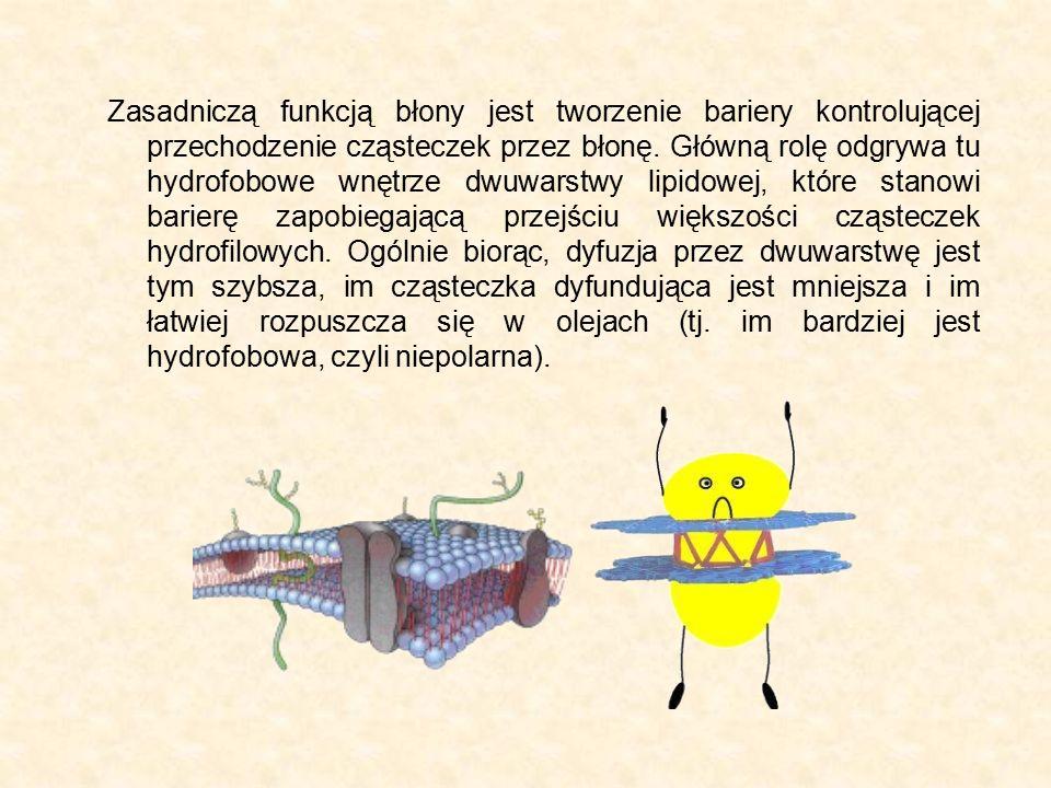 Zasadniczą funkcją błony jest tworzenie bariery kontrolującej przechodzenie cząsteczek przez błonę. Główną rolę odgrywa tu hydrofobowe wnętrze dwuwars