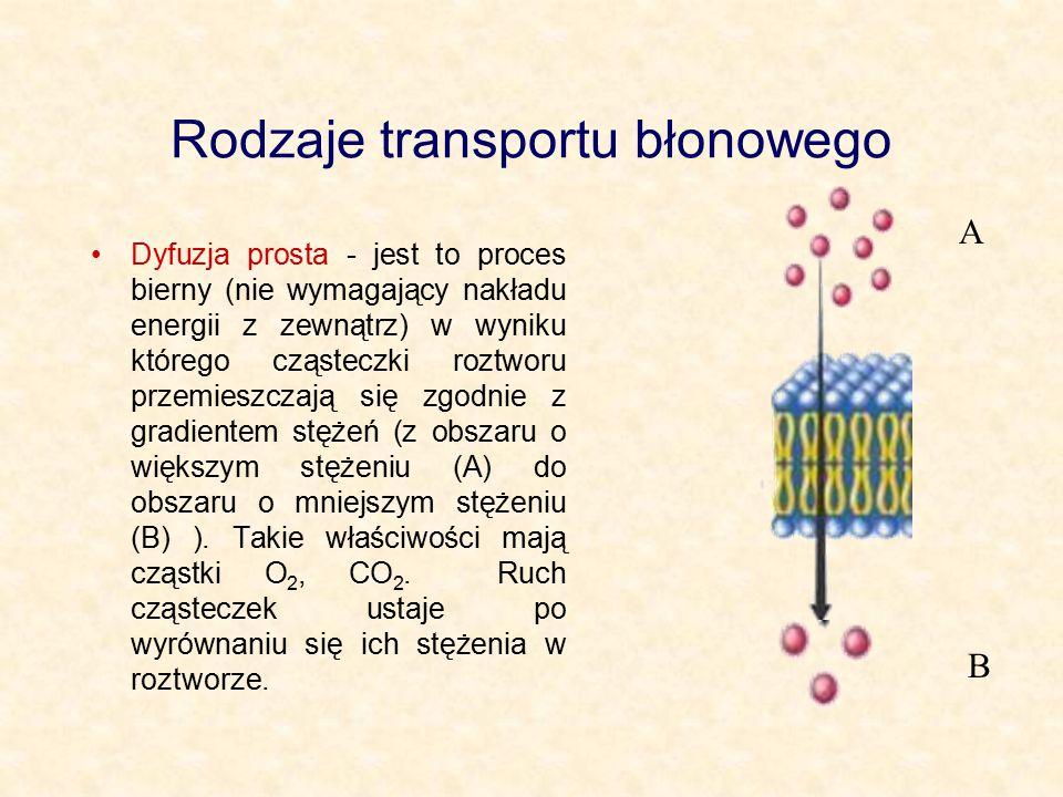 Rodzaje transportu błonowego Dyfuzja prosta - jest to proces bierny (nie wymagający nakładu energii z zewnątrz) w wyniku którego cząsteczki roztworu p