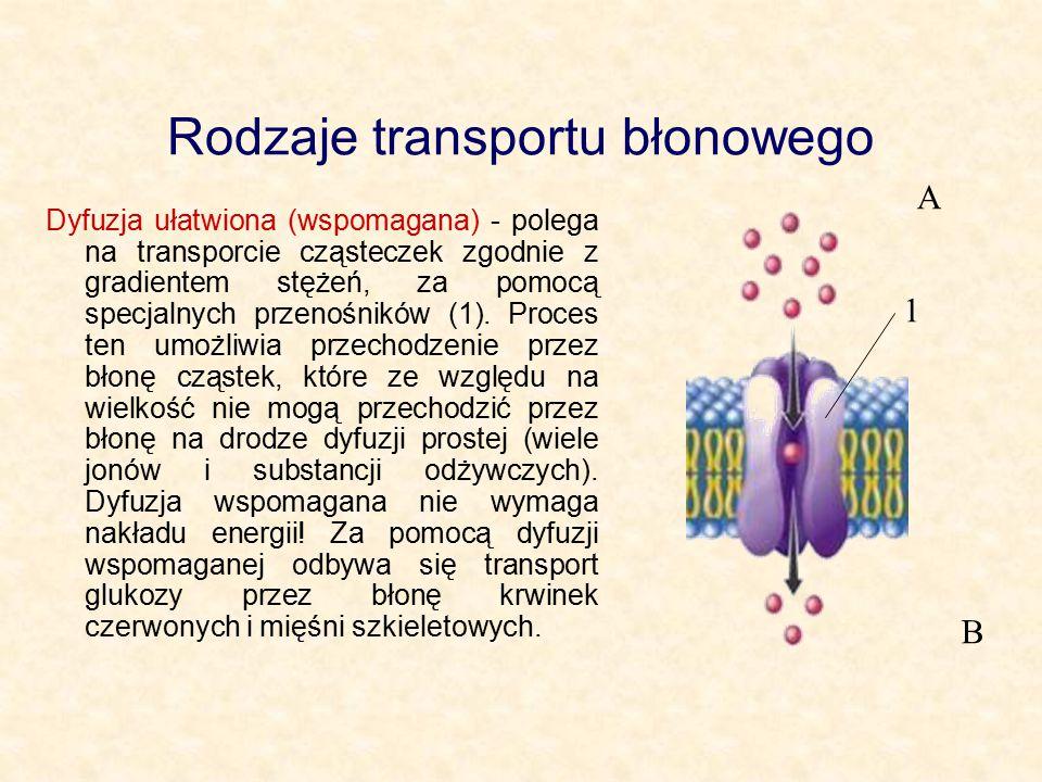 Rodzaje transportu błonowego Dyfuzja ułatwiona (wspomagana) - polega na transporcie cząsteczek zgodnie z gradientem stężeń, za pomocą specjalnych przenośników (1).