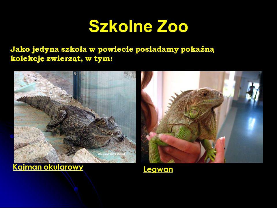 Szkolne Zoo Jako jedyna szkoła w powiecie posiadamy pokaźną kolekcję zwierząt, w tym: Kajman okularowy Legwan