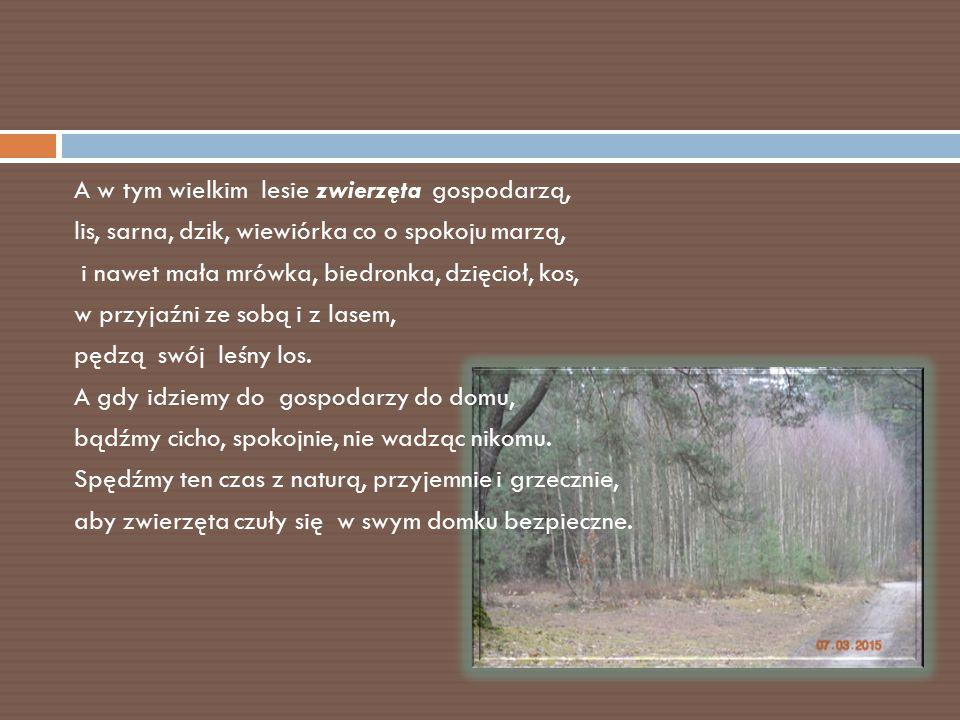 A w tym wielkim lesie zwierzęta gospodarzą, lis, sarna, dzik, wiewiórka co o spokoju marzą, i nawet mała mrówka, biedronka, dzięcioł, kos, w przyjaźni
