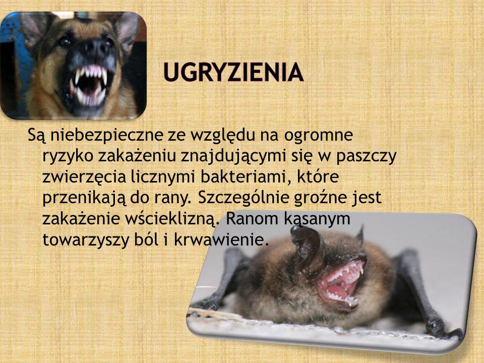 Są niebezpieczne ze względu na ogromne ryzyko zakażeniu znajdującymi się w paszczy zwierzęcia licznymi bakteriami, które przenikają do rany.