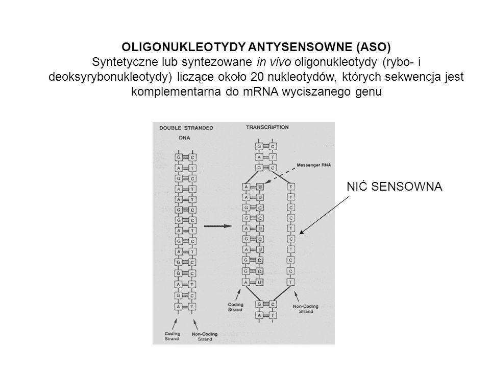 OLIGONUKLEOTYDY ANTYSENSOWNE (ASO) Syntetyczne lub syntezowane in vivo oligonukleotydy (rybo- i deoksyrybonukleotydy) liczące około 20 nukleotydów, których sekwencja jest komplementarna do mRNA wyciszanego genu NIĆ SENSOWNA