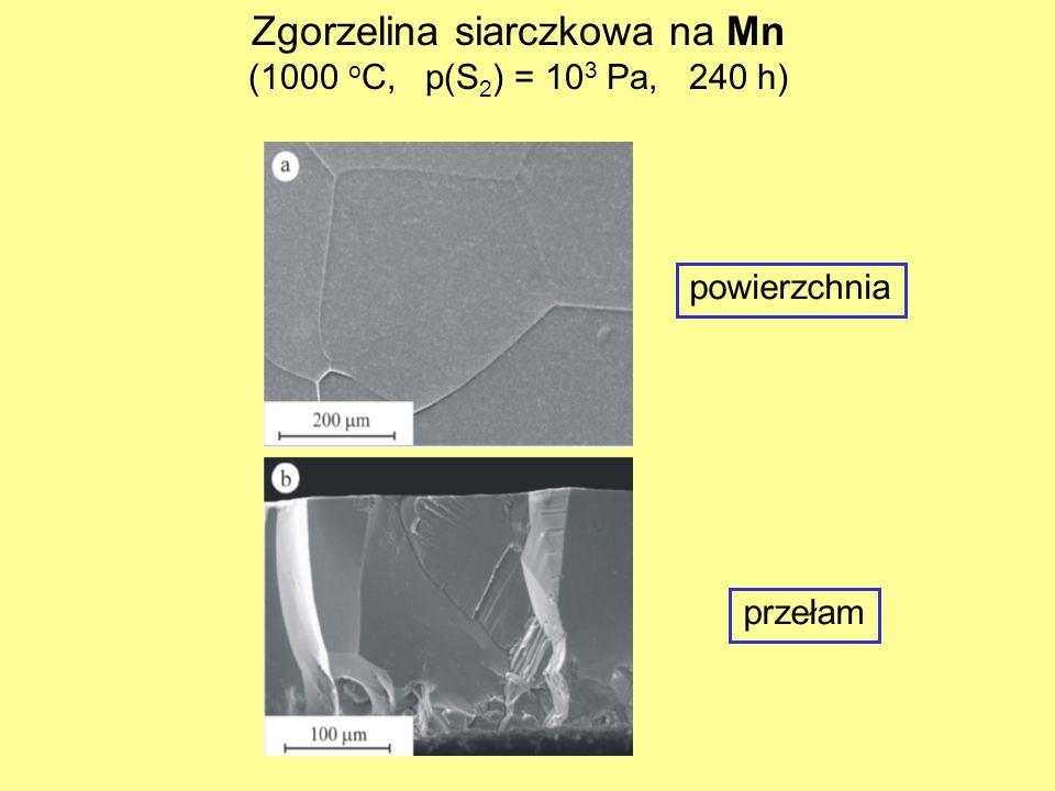 Zgorzelina siarczkowa na Mn (1000 o C, p(S 2 ) = 10 3 Pa, 240 h) powierzchnia przełam