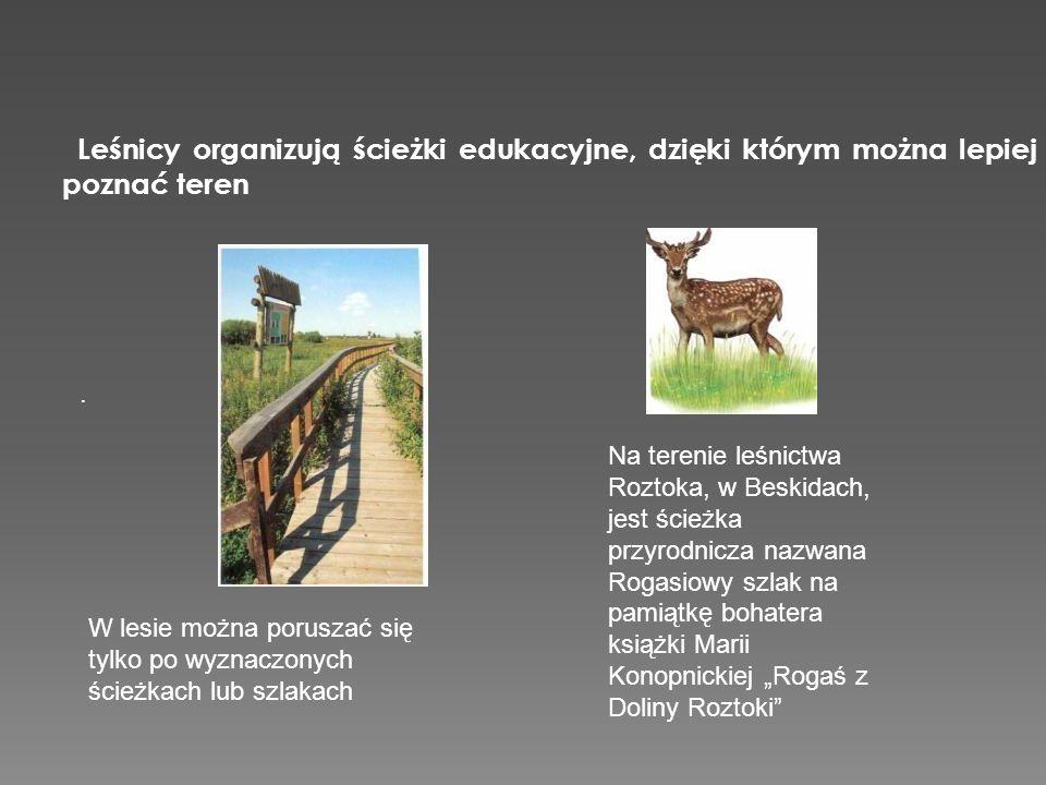 Leśnicy organizują ścieżki edukacyjne, dzięki którym można lepiej poznać teren. W lesie można poruszać się tylko po wyznaczonych ścieżkach lub szlakac