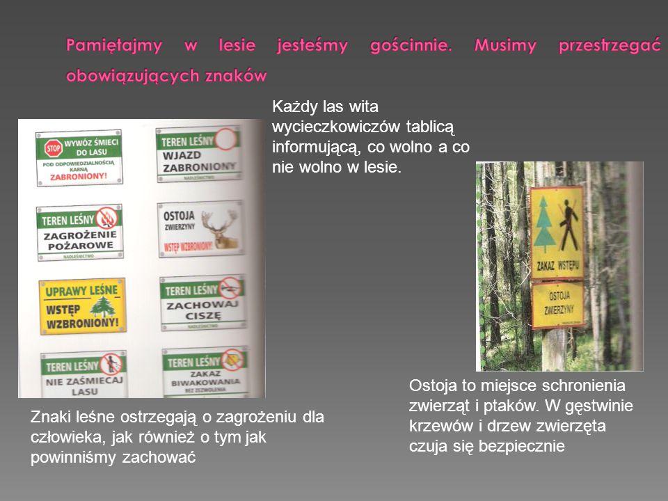 Każdy las wita wycieczkowiczów tablicą informującą, co wolno a co nie wolno w lesie.. Znaki leśne ostrzegają o zagrożeniu dla człowieka, jak również o
