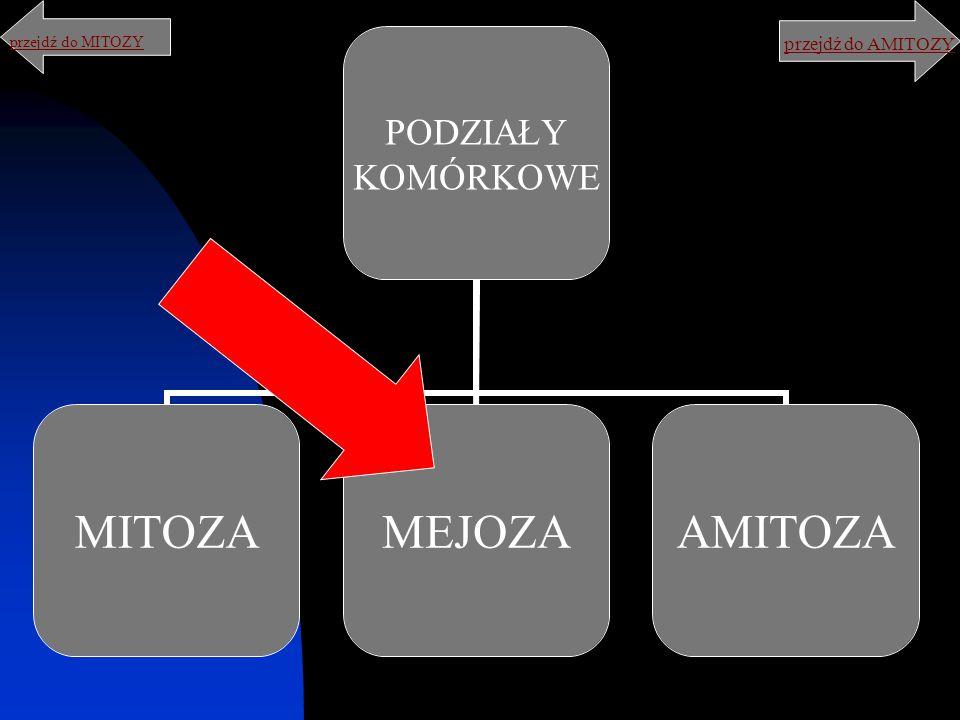 PODZIAŁY KOMÓRKOWE MITOZAMEJOZAAMITOZA przejdź do AMITOZY przejdź do MITOZY