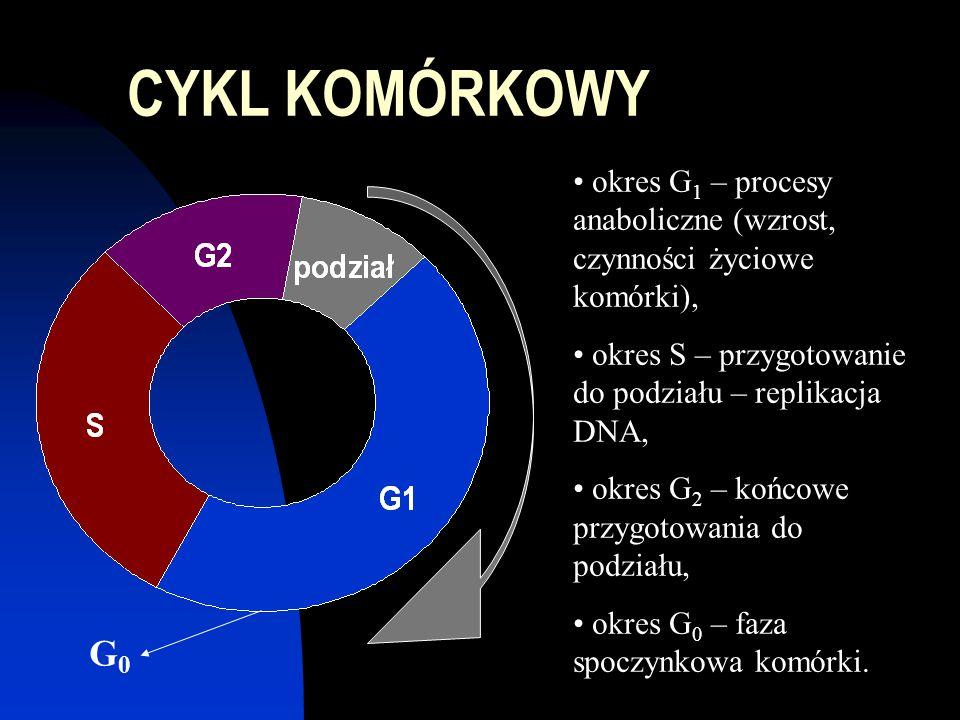CYKL KOMÓRKOWY okres G 1 – procesy anaboliczne (wzrost, czynności życiowe komórki), okres S – przygotowanie do podziału – replikacja DNA, okres G 2 – końcowe przygotowania do podziału, okres G 0 – faza spoczynkowa komórki.