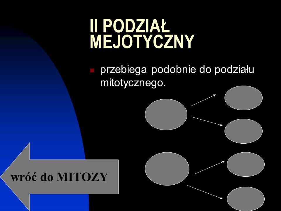 II PODZIAŁ MEJOTYCZNY przebiega podobnie do podziału mitotycznego. wróć do MITOZY