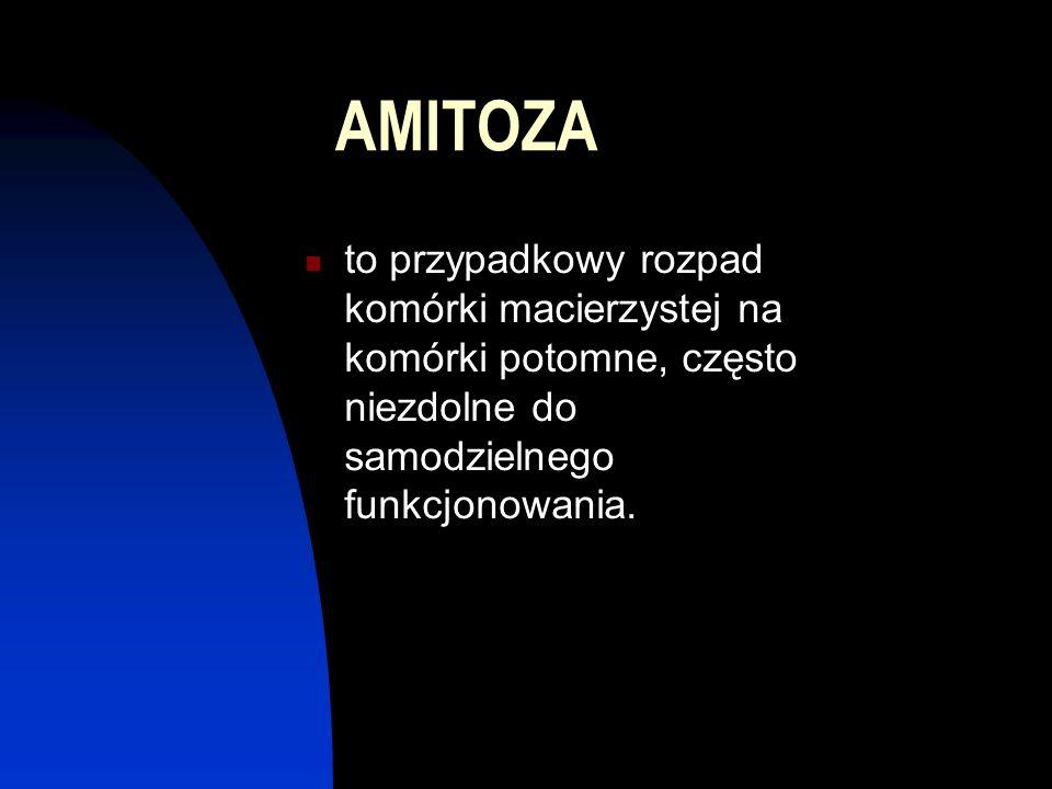 AMITOZA to przypadkowy rozpad komórki macierzystej na komórki potomne, często niezdolne do samodzielnego funkcjonowania.