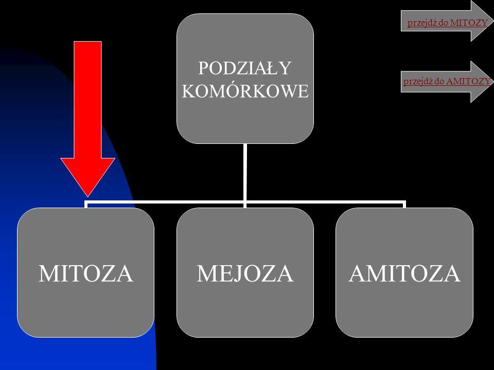 podsumowanie: MITOZA prowadzi do powstania dwóch komórek potomnych o takiej samej liczbie chromosomów jak komórka macierzysta, składa się z czterech faz (profazy, metafazy, anafazy i telofazy), dotyczy komórek somatycznych.