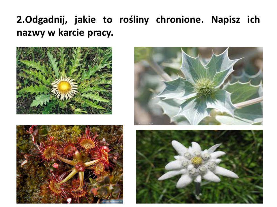 2.Odgadnij, jakie to rośliny chronione. Napisz ich nazwy w karcie pracy.
