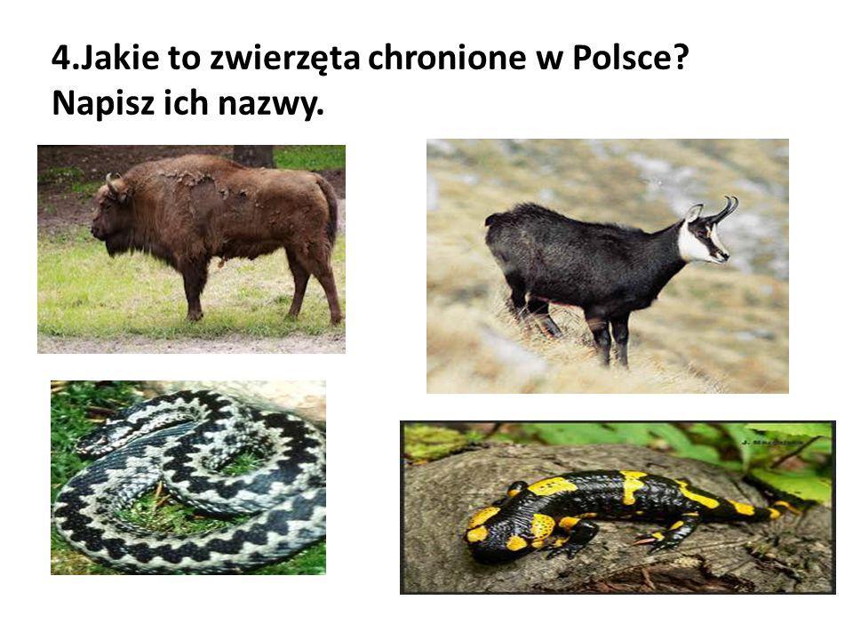 4.Jakie to zwierzęta chronione w Polsce? Napisz ich nazwy.